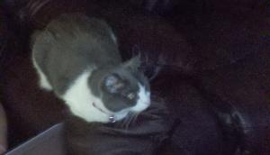 My cat Jezabel happily watching TV