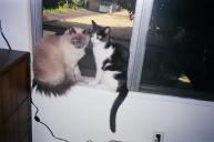 Jezabel & her mom on Window Ledge