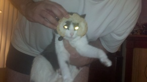 Catbreading in Honor of Southpark
