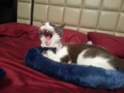 Jezabel Yawning