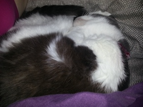 Sleeping Jezabel