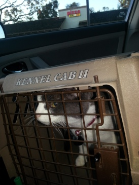 Going To The Vet