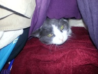 Jez under her covers