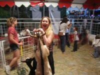 Goat trying to eat my hand OC Fair 2011