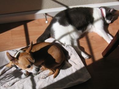 Sunbathing Friends