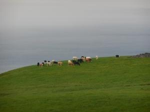 Gorgeous Ireland Scenery 2