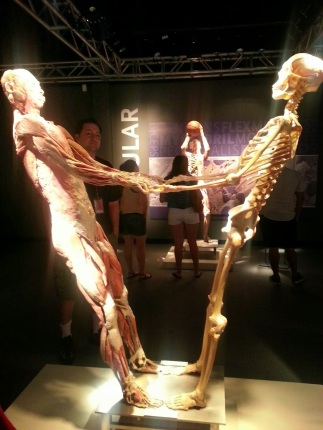 Human Body - Same Person - Skeletal Structure and Muscles