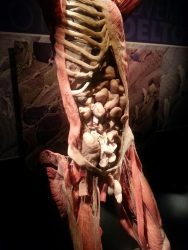 Interior of Human Body