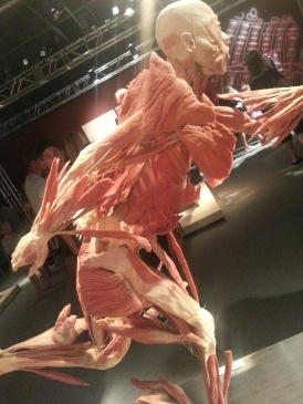 Muscles of Human in Action
