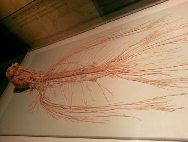 Nervous System Human Body