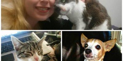 animal medication, veterinarian, online pharmacies