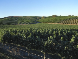 December Signature Key to Wine Country Photo - Photo Credit goes to Santa Barbara Vintner's Association