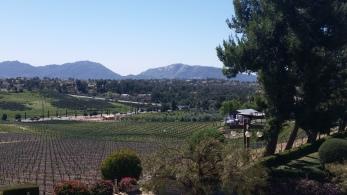temecula valley, wine tasting, crush event, temecula